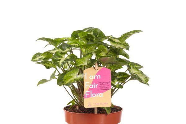 Duurzaam Plentygreen | Fair Flora label