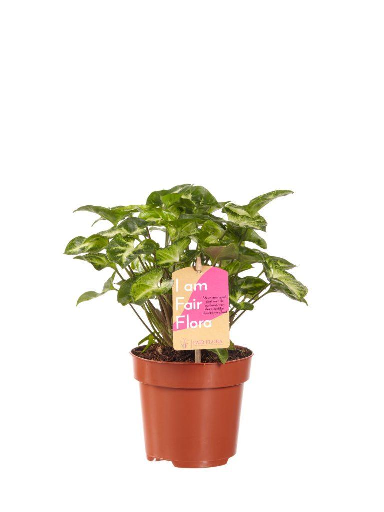 Duurzaam Plentygreen   Fair Flora label